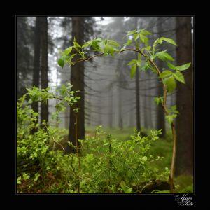 DSC_9656HaniPhoto_resize.jpg